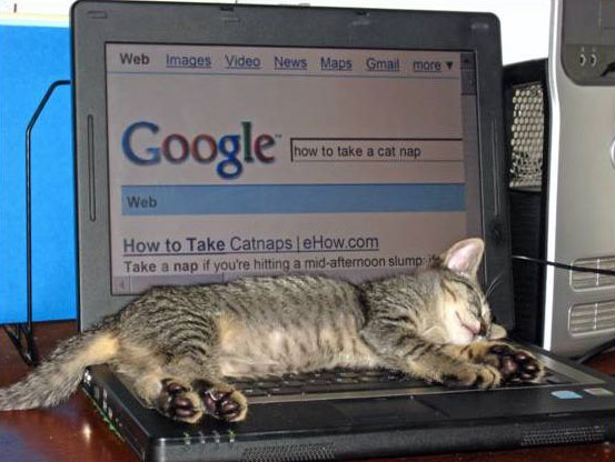 Google privacy e gatti
